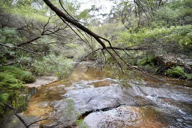 Creek, bush, Bushwalk, jade jackson photography, Wentworth falls creek