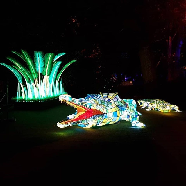 crocodile,lit,up