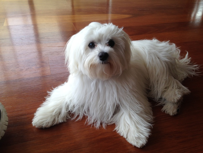 dog playdates, things to do with your dog in perth, fur baby boutique and cafe, dog friendly,