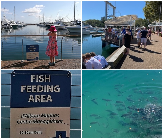 fish feeding, d albora marinas, nelson bay, school holidays, kids, choildren, family friendly, things to do, activities, free, fish feeding, NSW, port stephens,