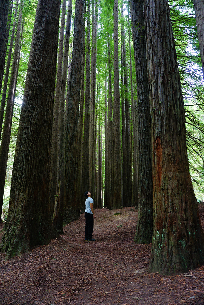The Redwoods Beech Forest Melbourne