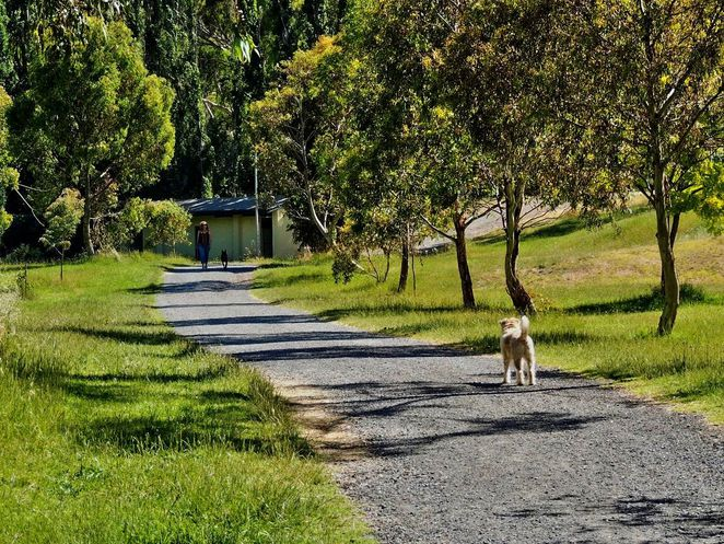 frank smith park, frank smith reserve, park and wetland, frank smith, coromandel valley, dog friendly, walking trails, dog heaven, wetlands, dog friendly park