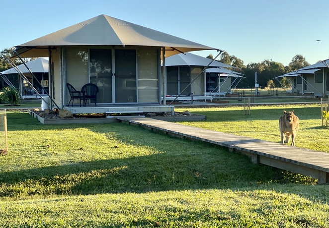 Luxury glamping with kangaroos for neighbours