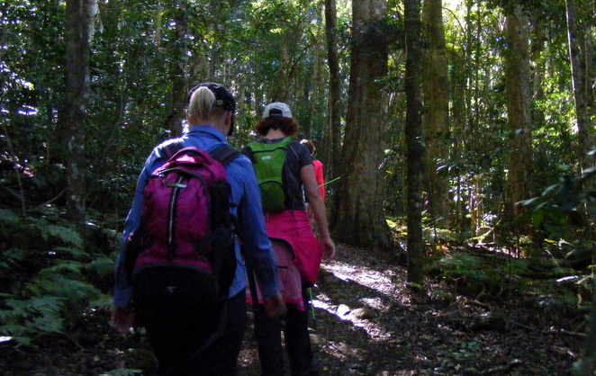 Walking through lush rainforest on the Moran Falls track
