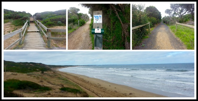 Ocean Grove Beach, Dogs allowed, dog-friendly, dogs, walking track, dogs permitted,