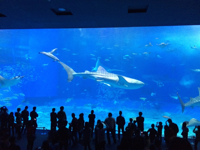 okinawa, japan, churaumi aquarium, ocean expo park