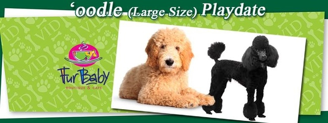 Oodles,large,size,play,dates