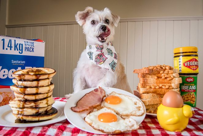 victorian dog rescue spring into spring breakfast, melbourne golf academy, heatherton, community event, fun things to do, vicdrg, raffle prizes, silent auction, charity, fundraiser, food and drink, vegan, vegetarian, breakfast event