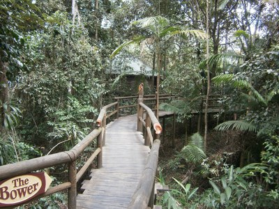 Walkway to treehouse The Bower