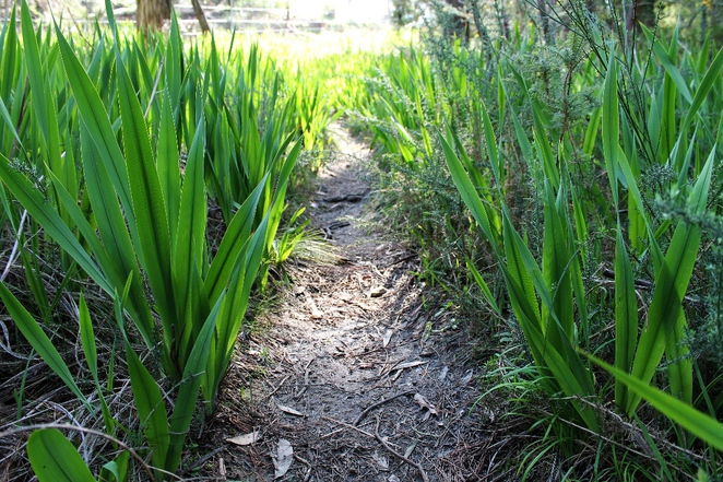 adelaide hills, aldgate, mylor, trail, walking trail, bandicoots, walk, adelaide, dogs, bulbs