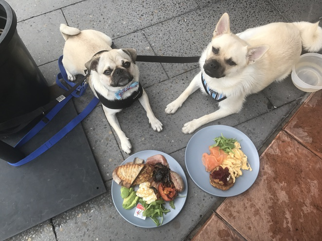 beartown coffee house, woolloongabba, brisbane, inner suburbs, southside, southern suburbs, dog friendly, restaurant, breakfast, cafe, coffee, brunch, bare bones espresso, gabba