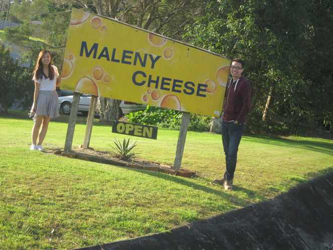 big things, australia, road trip, attraction, tourist, queensland, brisbane, cairns, big harp, maleny, montville, cheese factory, cheese, maleny cheese, sunshine coast