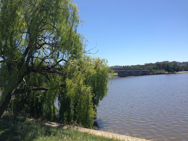 bowen park canberra lake burley griffin black swan duck pelican glassworks cycle walk barton feed barbecue
