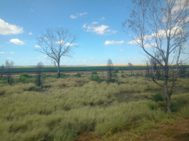 Central Highlands trees and fields