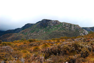 Cradle Mountain, Tasmania. Image from Wikimedia Commons (by Periptus).