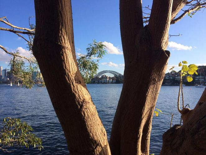 cremorne, point, reserve, walks, circuit, sydney, harbour, bridge, city