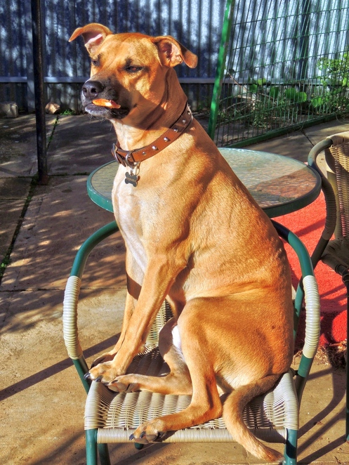 dogs, cats, shelter, no kill, animals, abandoned, abandoned dogs, hahndorf, adelaide hills, pet, pizza