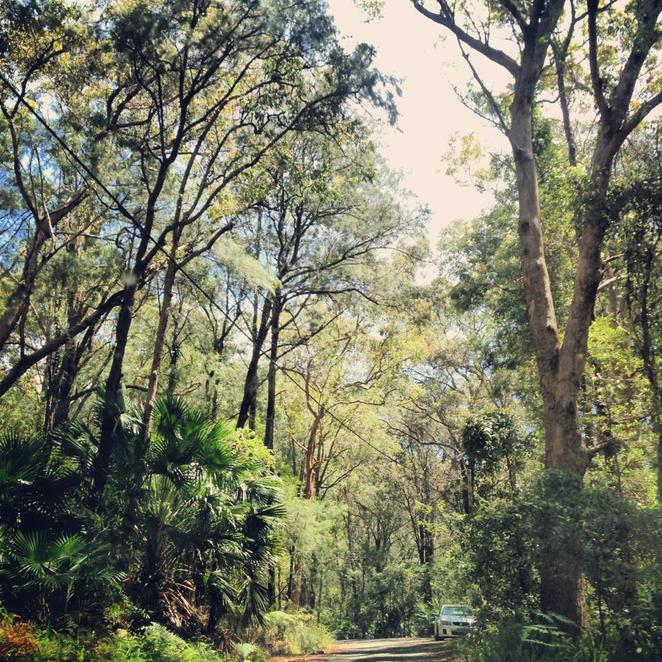 forest, suburb, pearl beach, national park, brisbane waters, bush, bushland, nature, vegetation, relax, australia, nsw, central coast