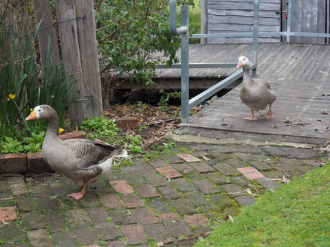 Geese, Orbost, Slab Hut, Visitor Information