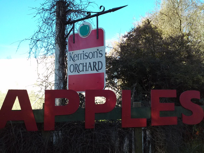 Kerrisons apple orchard, Pialligo