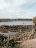 onkaparinga river, wetlands hike