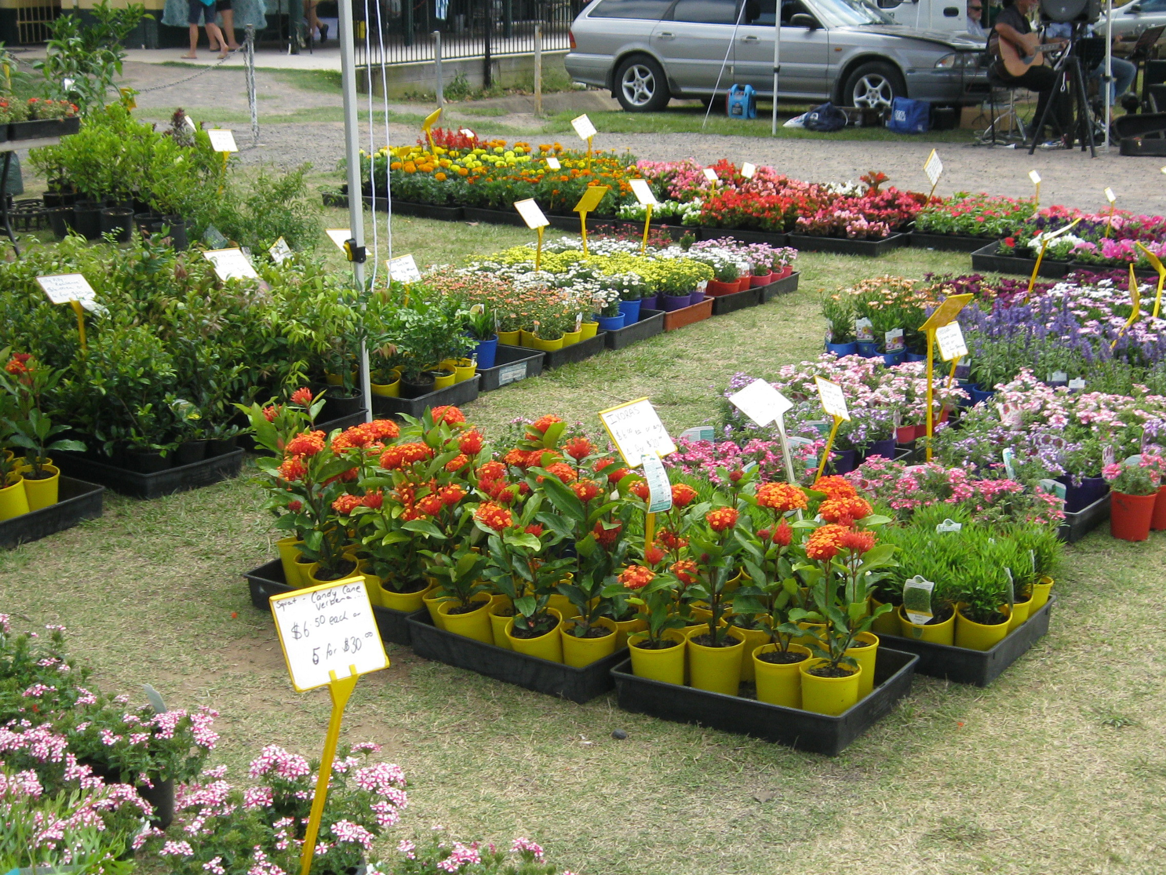 Where to Buy Plants and Pots on the Sunshine Coast Sunshine Coast – Buy Garden Plants