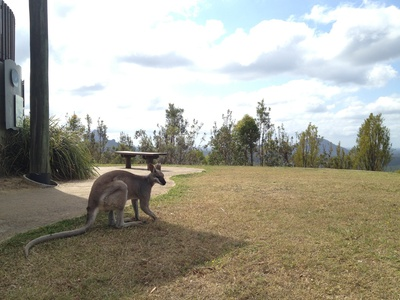 The gorgeous wallaby was happy to let us snap more than a few pictures
