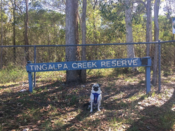 tingalpa creek reserve, tingalpa, dog friendly, bushwalking, bushwalk, brisbane, eastern suburbs, southern suburbs, redlands, moreton bay, horseriding, hiking, nature, barbecue, fishing, fishing platform, picnic, picnic area