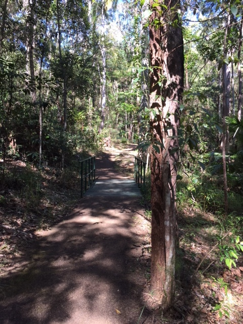 Top Rainforest Walks for Scorching Hot summer days, Ben Bennett Bushland Park, Caloundra West, Booloumba Falls Walk, Conondale National Park, Conondale, green rainforests, waterfalls, creeks, panoramic scenery, wildlife, walking, swimming, trails, rock pools, the Breadknife, Booloumba Gorge lookout, Buderim Forest Waterfall Walk, Lindsay Road, Quorn Close, Harry's Lane, Martins Creek, 600 metre boardwalk, wheelchair accessible, barbecues, picnic tables, Edna Wallings, Buderim Palmwoods Heritage Tramway Walk, historical, Eric Joseph Foote War Memorial Sanctuary, Maddock Park on Ewen Maddock Dam, Glass House Mountains, family day out, horse riding, kayaking, fishing, canoeing, Maroochy Regional Bushland Botanic Gardens, Tanawha, Mary Cairncross Scenic Reserve, Maleny, Narrows and Baroon Lookouts on the Obi Obi Forest Walk, Kondadilla National Park, Montville, Great Walk