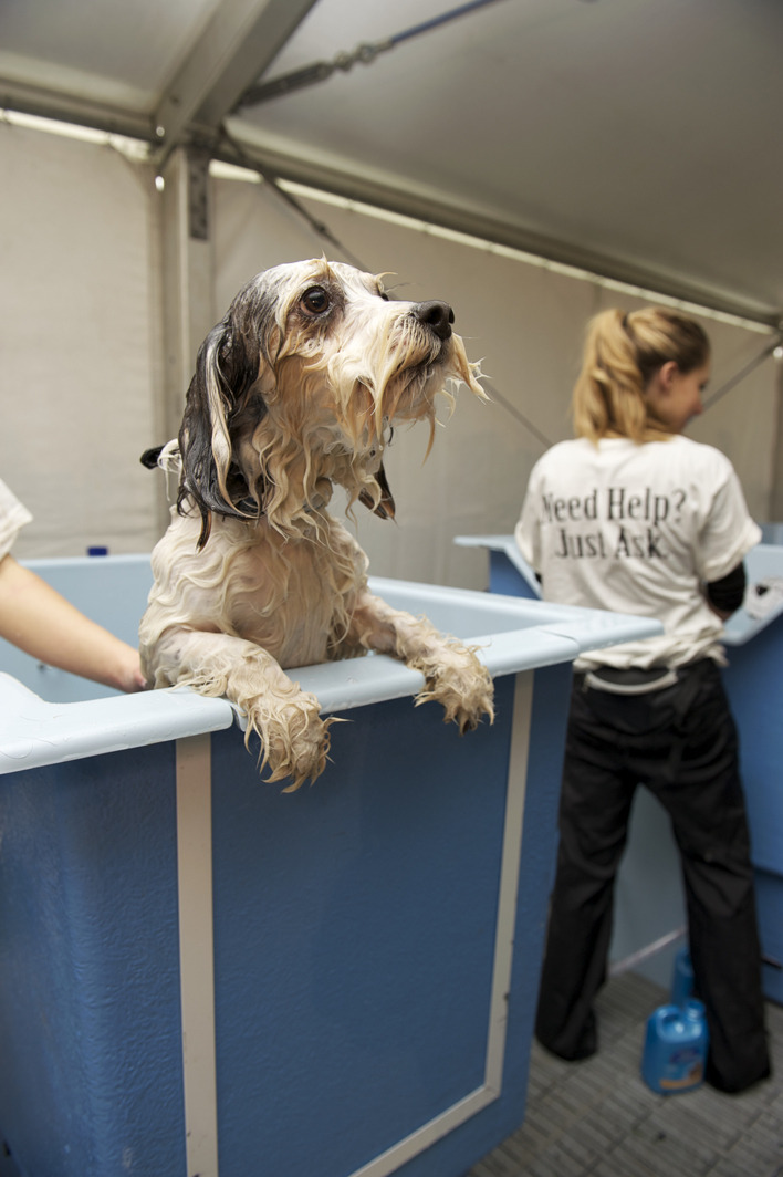 Dog Grooming Course Brisbane
