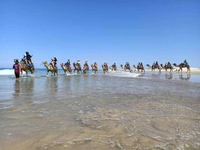 camel riding, oakfield Ranch, nelson bay, port stephens, anna bay, birubi beach, teenagers, things to do, NSW,