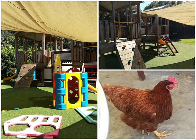 chickens, medowie macadamias, cafe, cafes with playgrounds, newcastle, nelson bay, port stephens, medowie, best cafes, NSW, scones, macadamia nuts, playground, family friendly cafes,