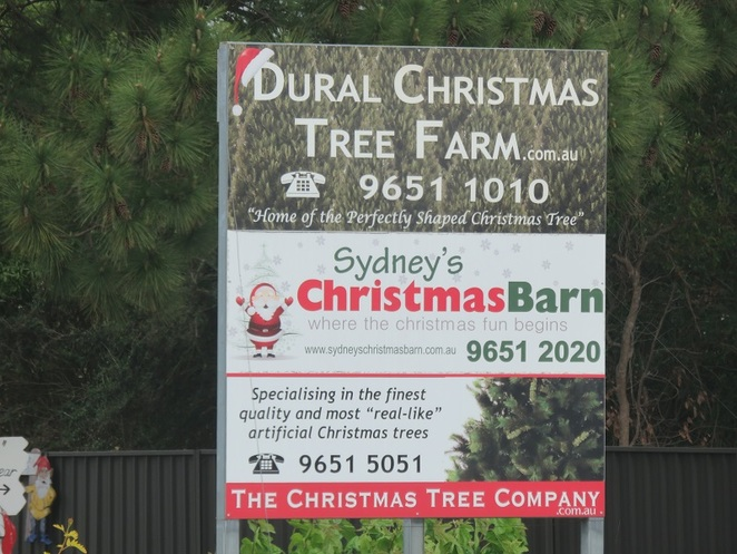 Dural Christmas Tree Farm, Dural, NSW