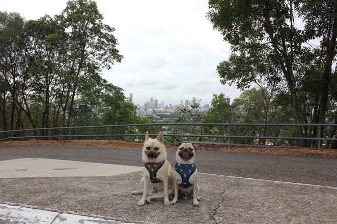 eildon hill reserve, walk, hike, dog friendly, brisbane, windsor, northside, northern suburbs, lookout, free, reservoir, outdoor, city, view