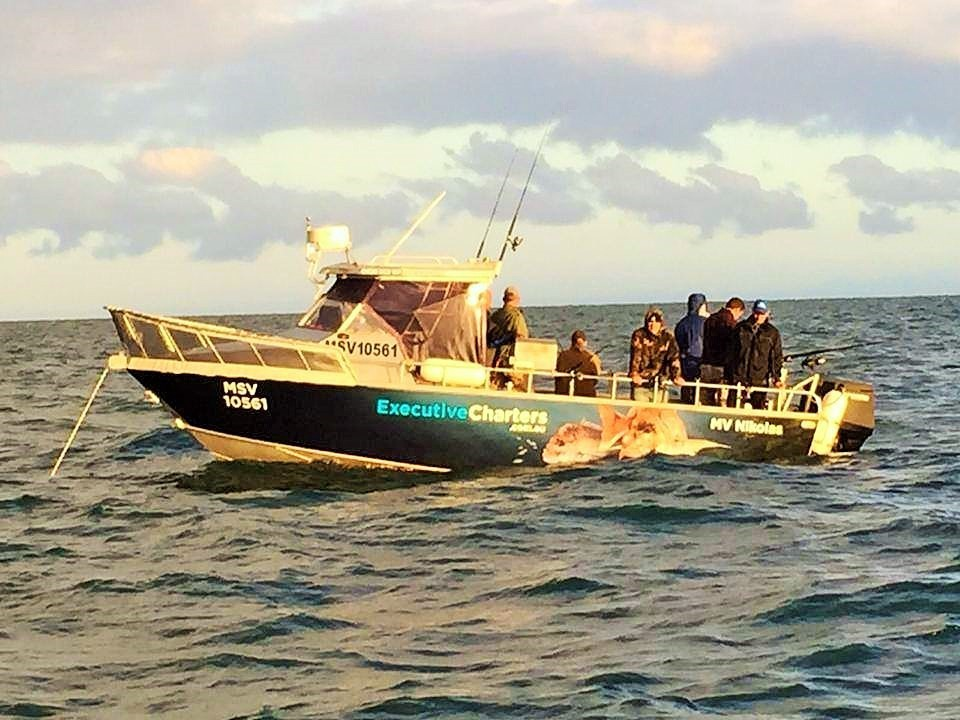 Best Guided Fishing Charters in Melbourne - Melbourne