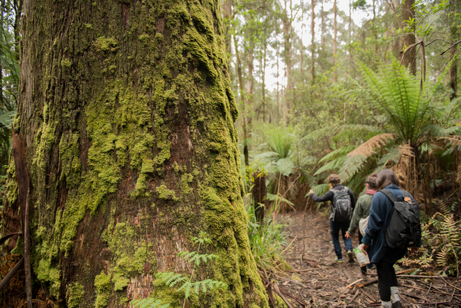 Forest campaigners, guided tour, save our forests