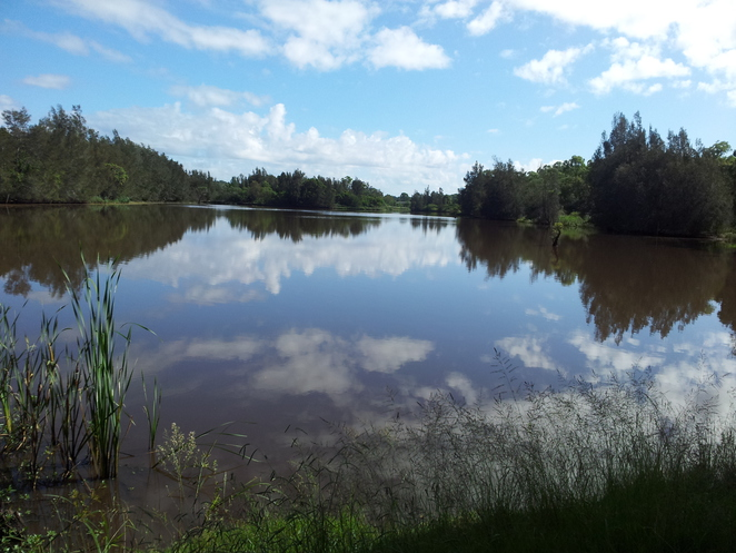 Longneck lagoon, wetlands, scheyville national park, environment
