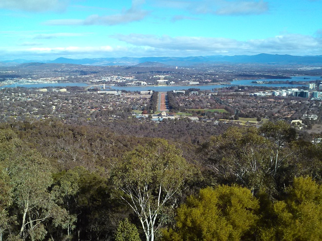 mount ainslie lookout, canberra, ACT, lookout, kangaroos, mount ainslie reserve, australian wildlife,