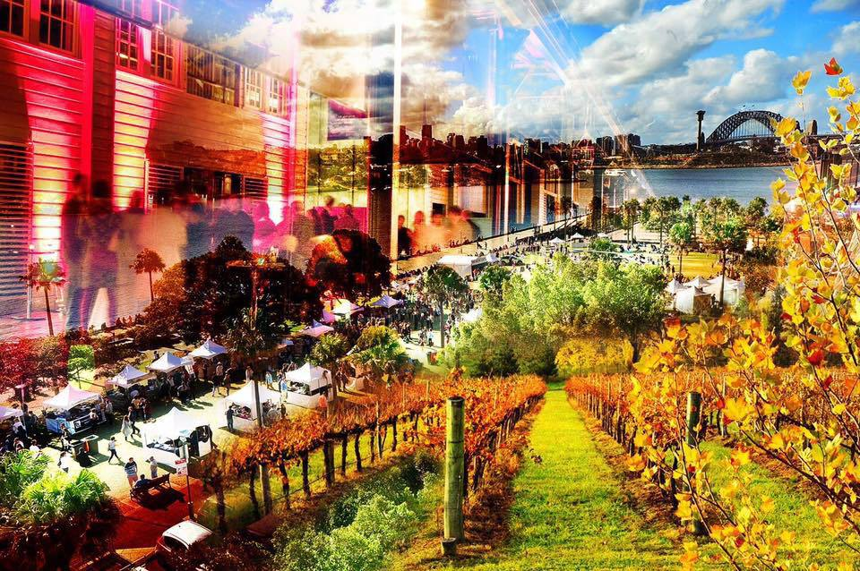 Food And Wine Festival Pyrmont