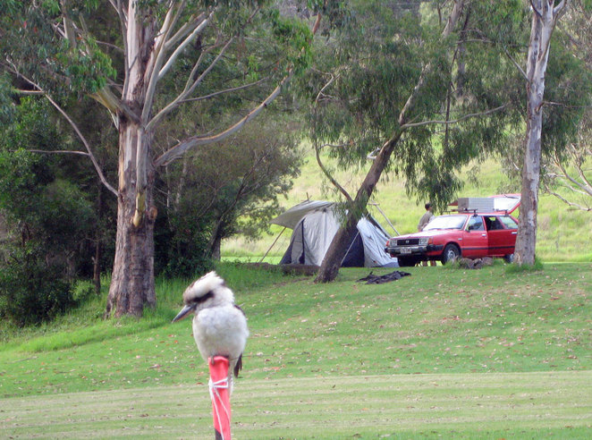The camping area is a wide shady green space where birds, kangaroos, possums and bilbies come up to your tent