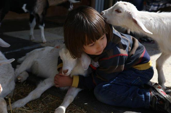 Sheep and goat milk cheese, dairy farm in Mudgee, kid friendly, animals to pat and feed, baby animals, Mudgee, road trip stop