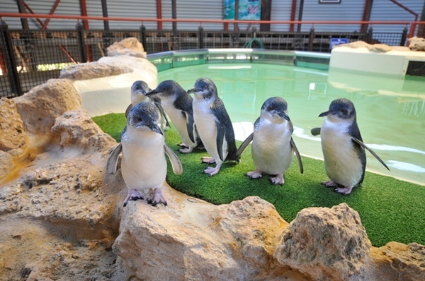 small,penguins,on,Penguin,Island