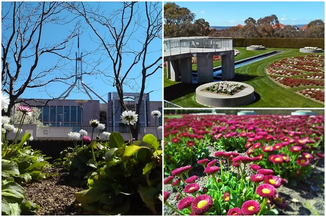 the house of representatives formal garden, canberra, parliament house, gardens, free, open gardens, things to do, parliament house, outside, wedding venues,