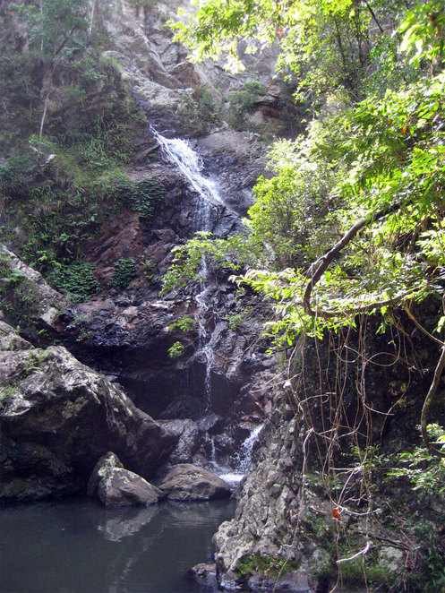 Baxter Falls in Kondalilla National Park