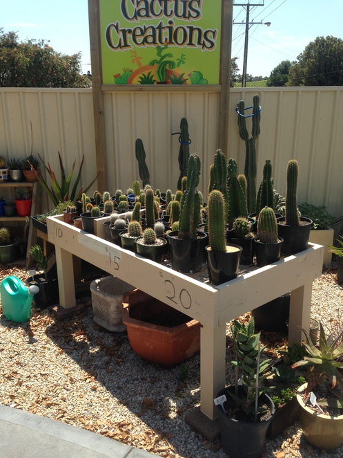 cactus creations, mclaren vale, adelaide gardening, cactus adelaide, succulents adelaide, garden centres, things to do in mclaren vale