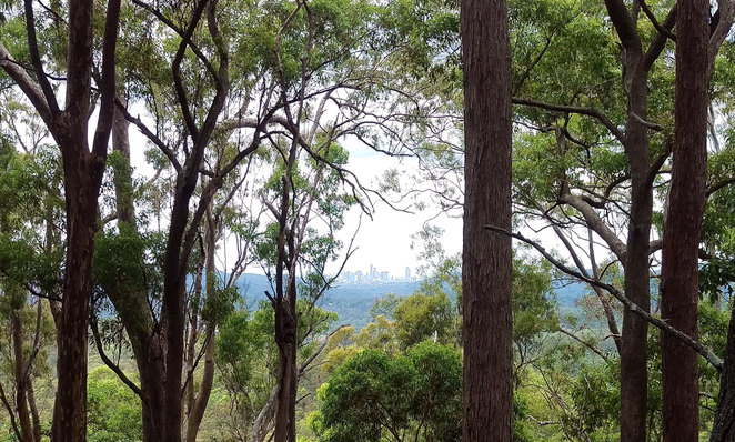 Brisbane City glimpsed through the trees on the walk