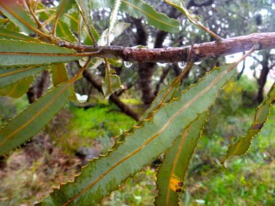 Carine, Rain, Photography, Nature, Bush, Perth, Park