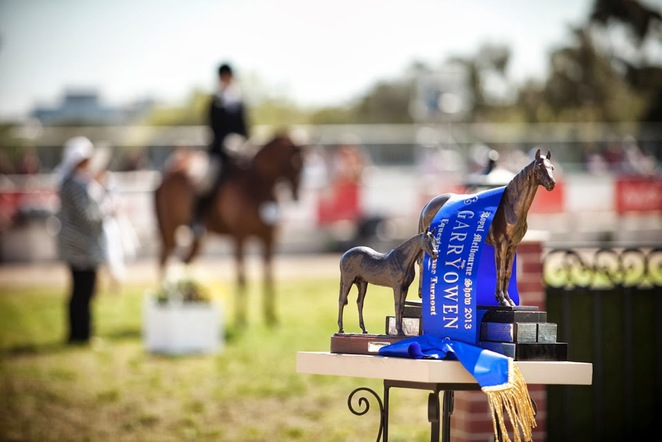 equestrian, competition, horses, Royal Melbourne Show, Melbourne, price
