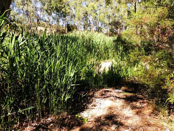 frank smith park, frank smith reserve, park and wetland, frank smith, coromandel valley, dog friendly, walking trails, dog heaven, wetlands, hide and seek