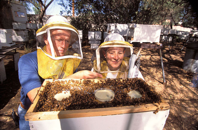 honey, melbourne, local food, organic, sustainable, bees